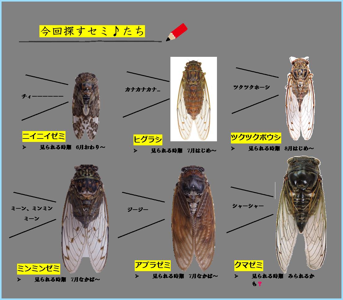 対象種2015